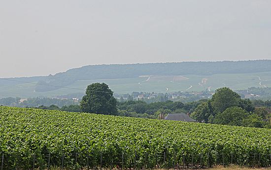 Champagne-landskap-3