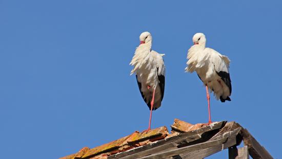 Storkpar3