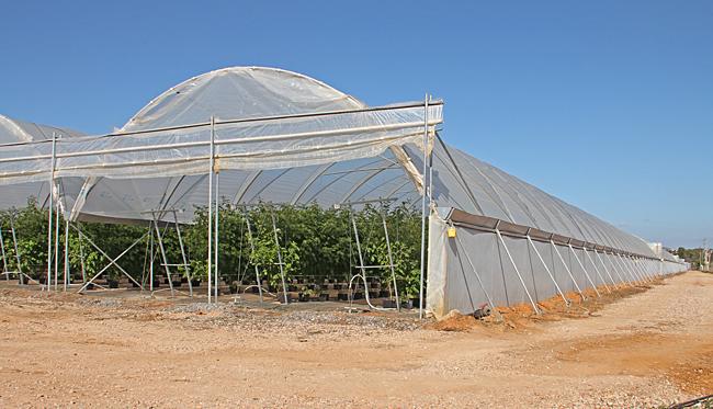 Efter gångvägen mellan Alagoa och Manta Rota har denna växthusanläggning byggts sedan vi var här förra gången. Totalt 14 längor, alla vi kunde se innehöll hallonplantor.