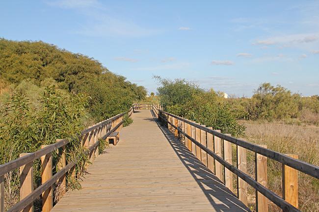 En strandnära gångbro har iordningställts en bit från stranden bland sanddynerna. Halva vägen mellan Manta Rota och Alagoa.