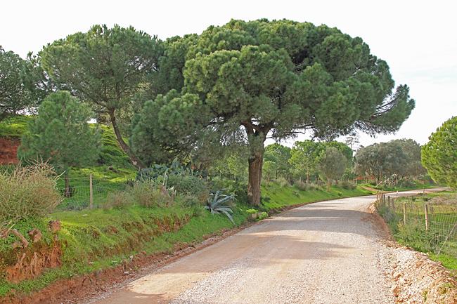 Cykelturen från Fonte Santa till Falésia gick delvis på lantlig grusväg kantad av pinjeträd.