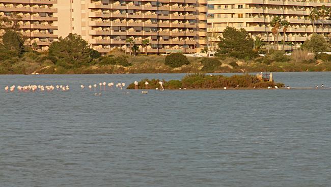 Naturreservat i form av en stor saltsjö som är hem för en stor flock av flamingos.