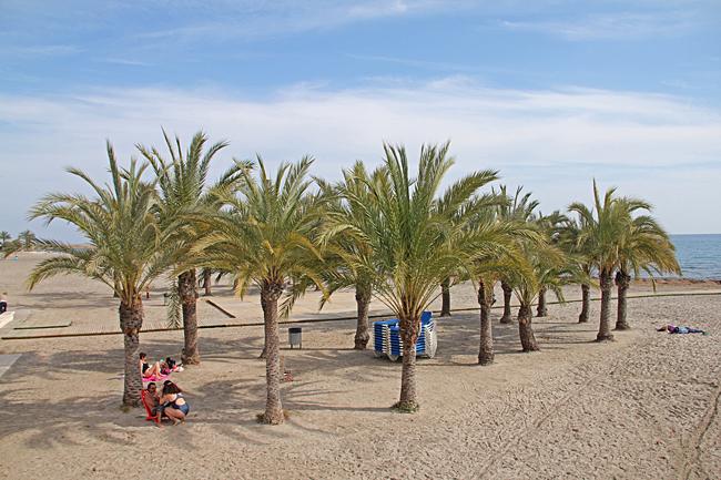 En skuggande palmdunge mitt på stranden.
