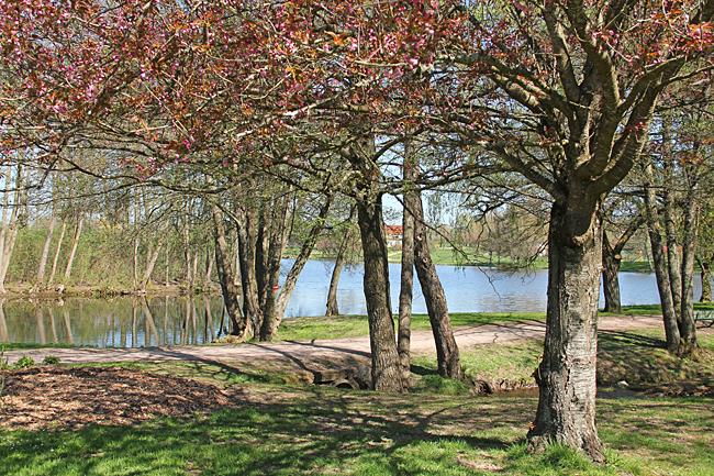En lummig del av promenaden runt sjön.