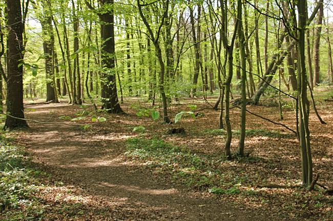 Rofylld skog att vandra i.