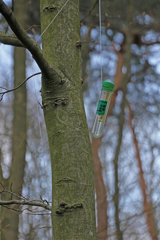 En annan geocache hängde högt uppe i ett träd väl synlig.