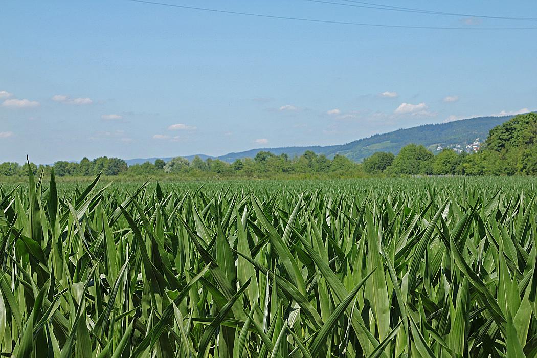 På vägen in till Heidelberg var det jordbrukslandskap.